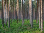 Участок в стародачном поселке г. Павловский Посад, 50 км от МКАД, 500000 руб.