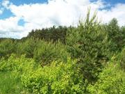 Лесной участок 18 соток, Сосновый бор. Ярославское ш. г.Сергиев Посад, 2000000 руб.