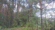 Продаётся земельный участок с лесными деревьями, 580000 руб.