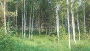 Продаётся земельный участок 32 сотки с лесными деревьями, 1800000 руб.