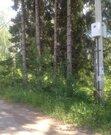 Участок 20 соток в окружении вековых сосен, елей и берез, 5200000 руб.