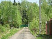 Прекрасный участок в хвойном лесу, Можайское - Минское, Летний отдых., 2800000 руб.