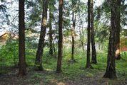 Дача из бревна в СНТ Пролетарец-1 у д. Ахматово, 1125000 руб.