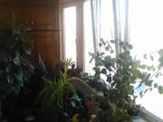 Дубна, 3-х комнатная квартира, ул. Попова д.3, 8120000 руб.