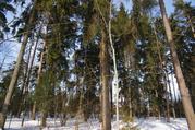 Участок 12 соток с лесными деревьями в Жаворонках, 2900000 руб.
