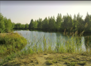 Участок 5,51 сотки СНТ-«Ягодное». Д. Новоселки, В шаговой досту, 200000 руб.