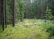Лесной участок 17.23 сотки, ПМЖ, Новая Моква, 25 км. Калужское ш., 7035384 руб.