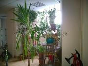 Ивантеевка, 3-х комнатная квартира, ул. Первомайская д.44, 5990000 руб.