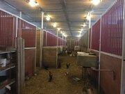 Продается конюшня, конно-спортивный клуб, 40000000 руб.