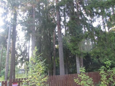 Участок 16 соток в сосновом лесу.