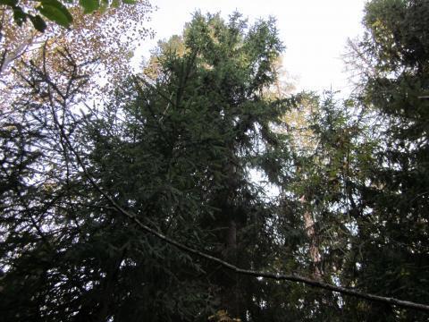 Лесной участок 13 соток, Минское ш, Сивково, Зеленая роща - 1, охрана