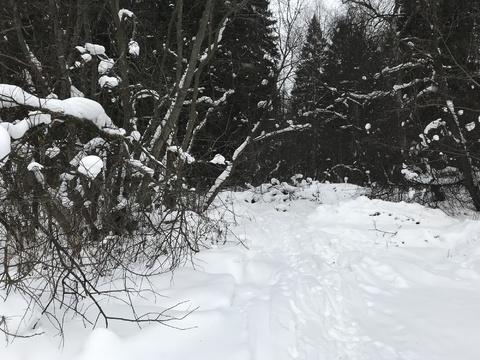 Участок 15 соток в деревне Дубровки рядом с лесом