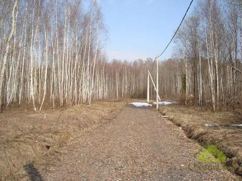 Участок 10 соток у леса в Бавыкино