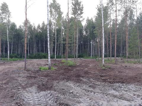 40 соток в сосновом лесу