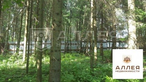 Лесной участок 15 сот.