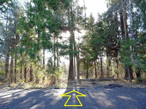 Лесной участок 15 соток на границе леса, Таширово, 60 км. от МКАД