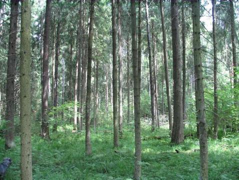 Лесной участок в д. Тимонино.