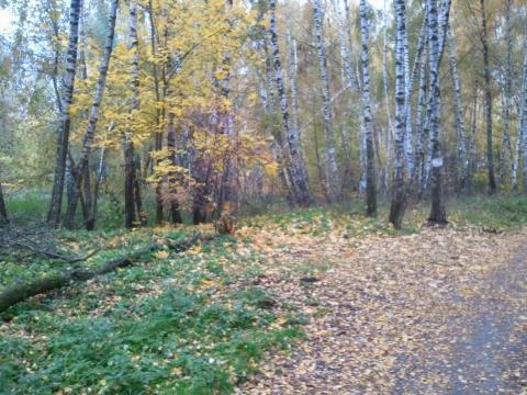 Участок под стр-во в коттеджного поселка в Малаховке, 52000000 руб.