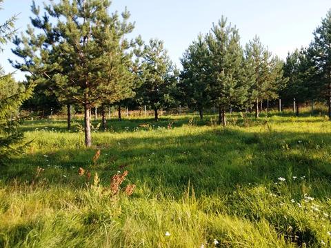 Предлагается участок 28 соток в д.Быково, Дмитровского р-на. В 75 км о