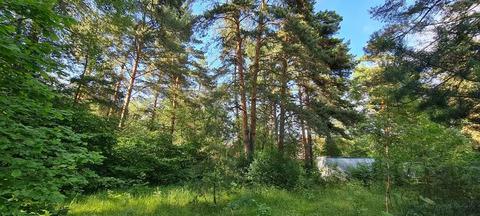 Рублево-Успенское ш. 16км. д. Большое Сареево сосновый уч 183 сотки