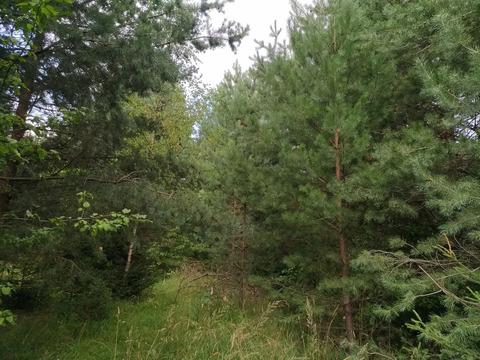 Продам земельный участок 28 соток в деревне Коняшино по улице Лесная.