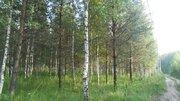 Продаётся земельный участок 16 соток с лесными деревьями, 900000 руб.